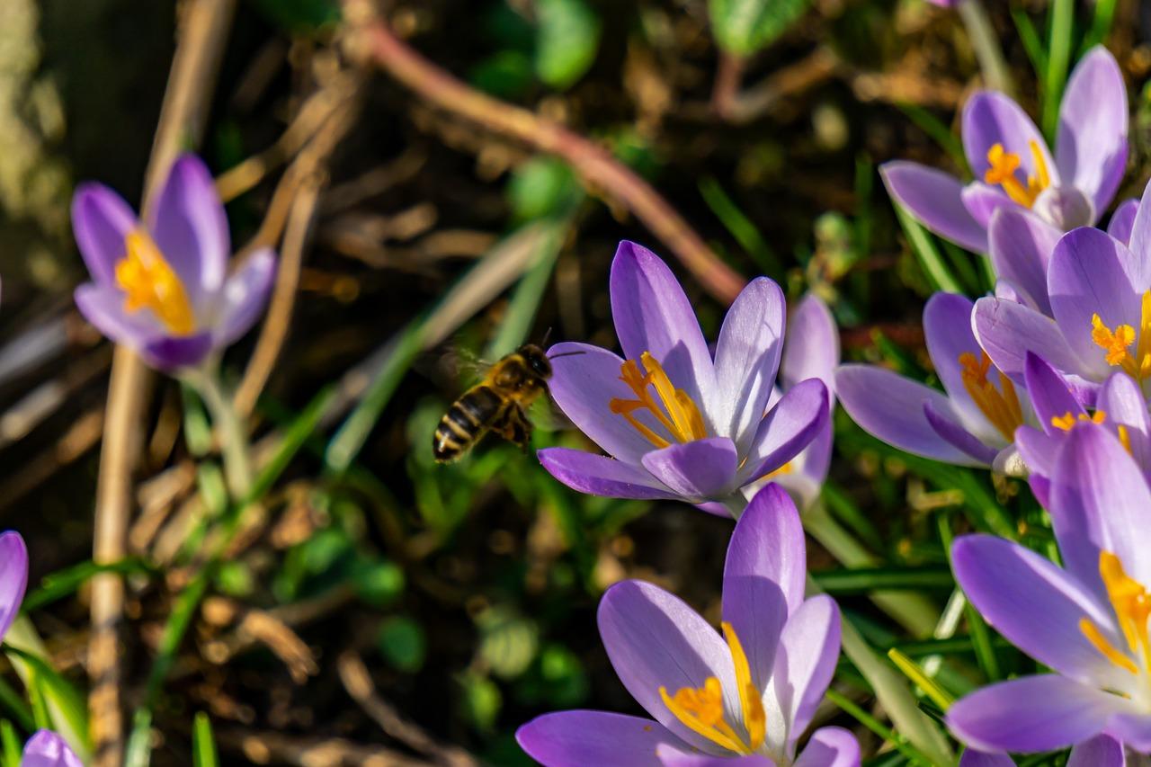 Risultato immagini per saffron flower