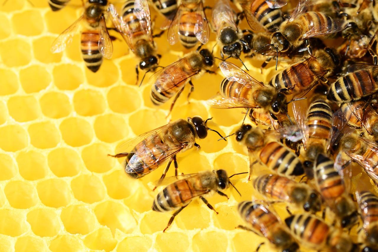 honey bees beehive honey bees public domain image - FreeIMG