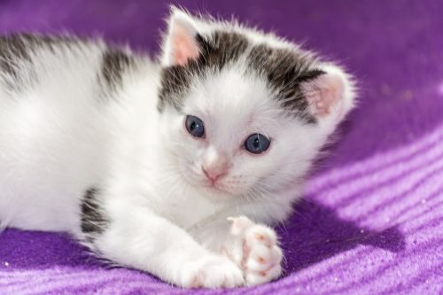 Baby Cat Cat Baby Kitten Young Cat Public Domain Image Freeimg